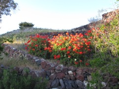 Flowers at the Site